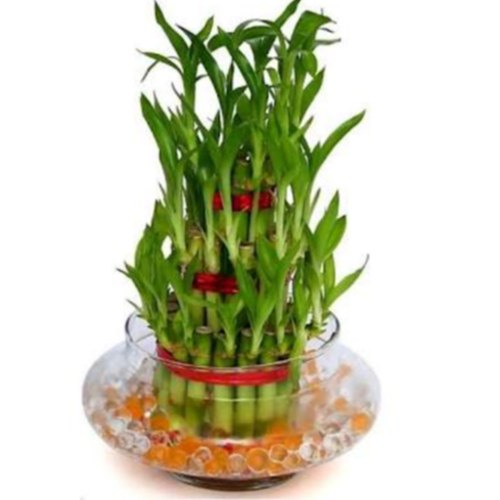 https://divinityworld.com/wp-content/uploads/2019/11/Feng-Shui-Lucky-Bamboo-Plant-1.jpg